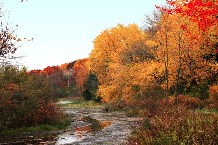 View of Natureland Park in Walworth County - red and gold fall colors