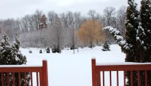 Snow covered back yard