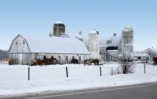 White barn and farm buildings covered in snow with horses outside.