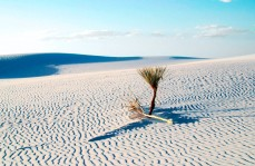 Sand with patterns and yucca plants