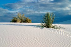 White sand with patterns - foliage
