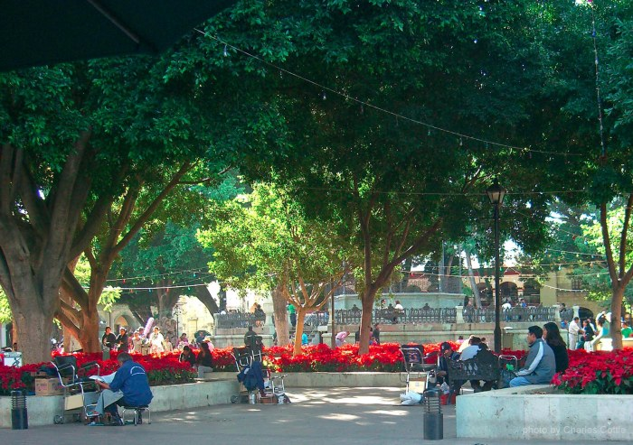 People already gathered at Oaxaca's shade covered town square. Poinsettias ring the area.