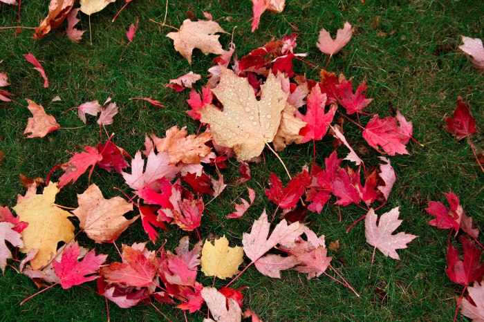 Close-up of multi-colored fallen leaves in Whitewater, Wisconsin