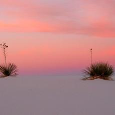 Sunset with yucca plants - pinkish orange sky