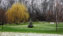 Patches of snow and green grass in a backyard scene.