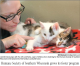 Cute kittens being petted by their foster parent