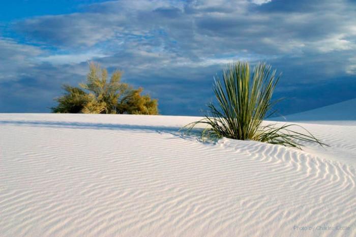 Dunes_08