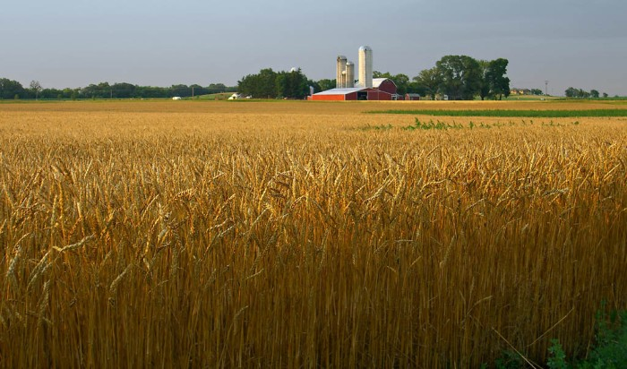 Wisconsin Wheat
